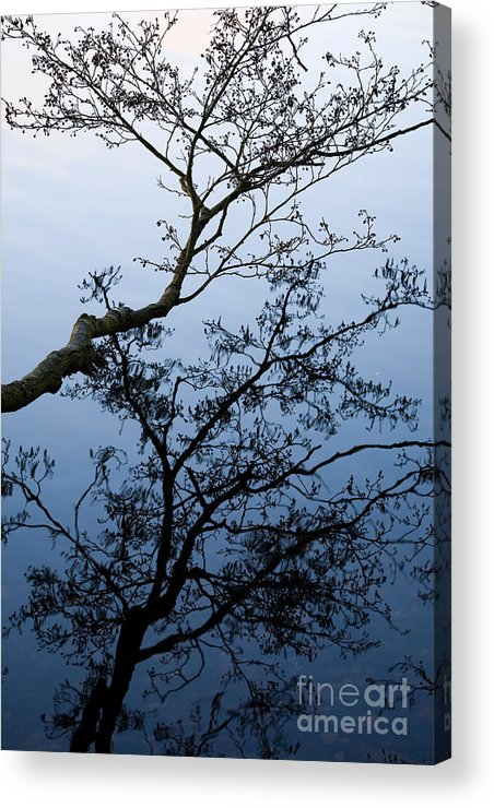 Alnus Glutinosa Acrylic Print featuring the photograph Reflections by Kathleen Smith