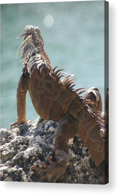 Animals Acrylic Print featuring the photograph Reflections by Lori Mellen-Pagliaro