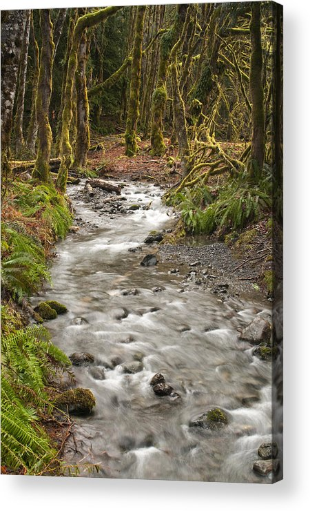 Forest Acrylic Print featuring the photograph River Forest by Chad Davis