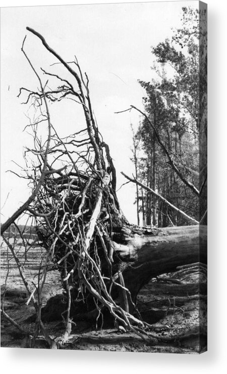 Storm Acrylic Print featuring the photograph Roots by Steven Crown