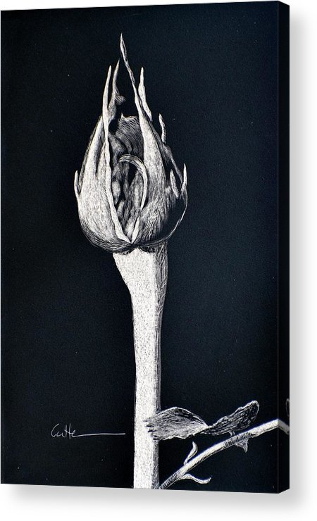 Rose Acrylic Print featuring the painting Rosebud by Diane Cutter