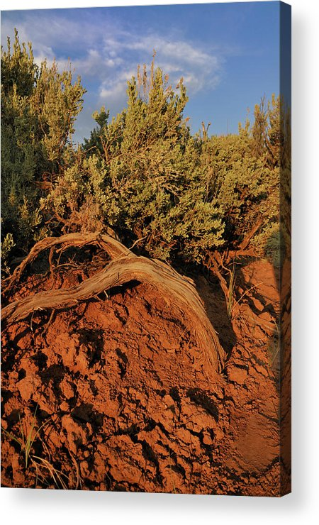 Landscape Acrylic Print featuring the photograph Sagebrush At Sunset by Ron Cline