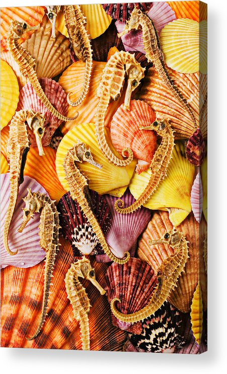 Seahorses Acrylic Print featuring the photograph Sea Horses And Sea Shells by Garry Gay