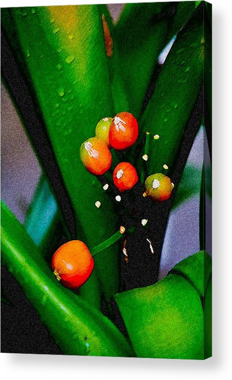 Flowers Acrylic Print featuring the digital art Seeds by John Toxey