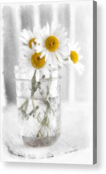 Daisy Acrylic Print featuring the photograph Simple Flowers by Edward Fielding