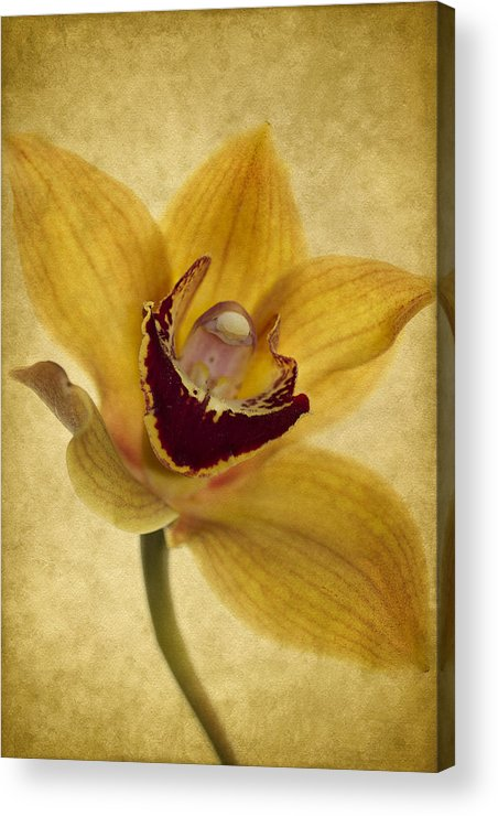 Orchid Acrylic Print featuring the photograph Singular Sensation by Rebecca Cozart