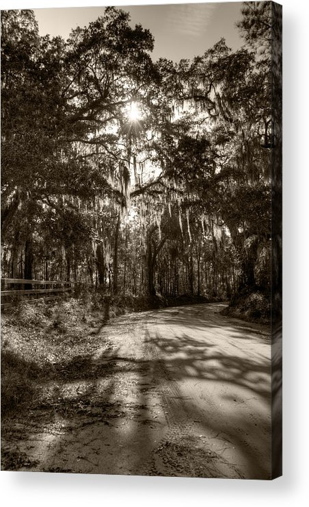 Live Oak Acrylic Print featuring the photograph Southern Oak Shadows by Dustin K Ryan