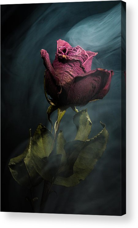 Rose Acrylic Print featuring the photograph Spirit Of A Dying Rose by Vincent Knaus