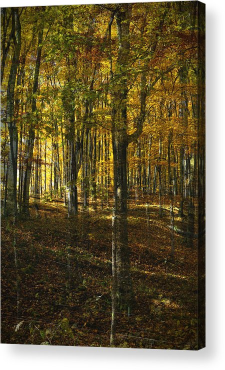 Woods Acrylic Print featuring the photograph Spirits In The Woods by Tim Nyberg