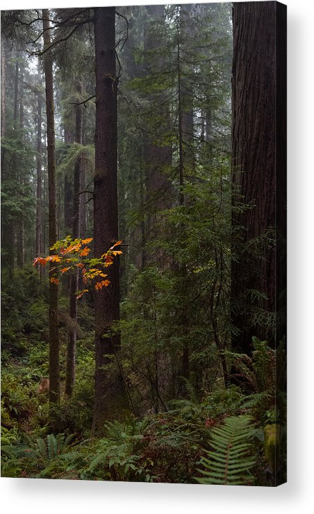 Fall Acrylic Print featuring the photograph Splash by Mark Alder