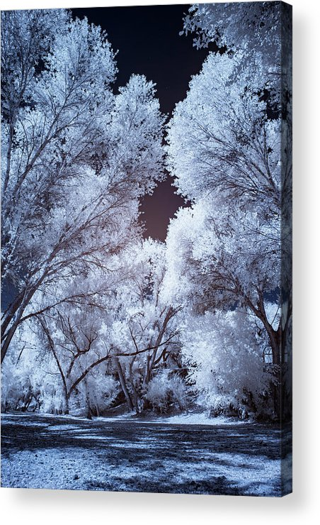 Arizona Acrylic Print featuring the photograph Spring Trees And Shadows by Cathy Franklin