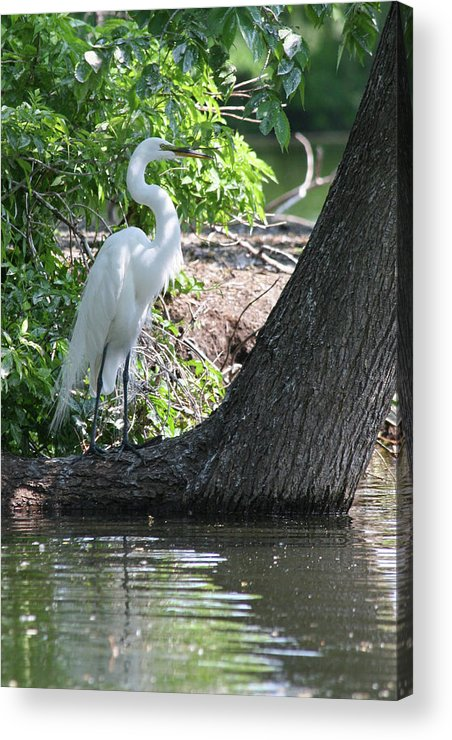 Shore Acrylic Print featuring the photograph Standing By Shore by Rachel Roushey