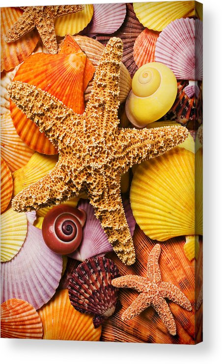Starfish Acrylic Print featuring the photograph Starfish And Seashells by Garry Gay