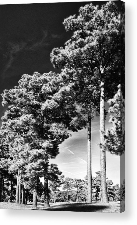 Nature Acrylic Print featuring the photograph Stillness by Gerlinde Keating - Galleria GK Keating Associates Inc