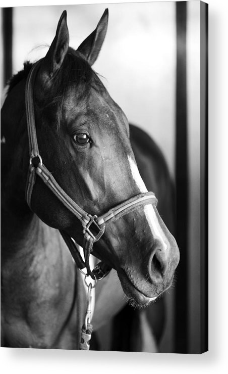 Horse Acrylic Print featuring the photograph Horse And Stillness by Marilyn Hunt