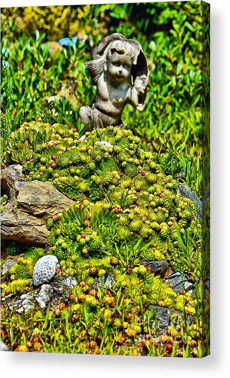 Succulent Acrylic Print featuring the photograph Succulent by Sandy Webster