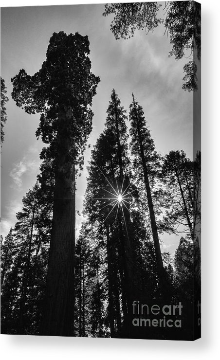 Sun Star Acrylic Print featuring the photograph Sun Star by Sylvia Sanchez
