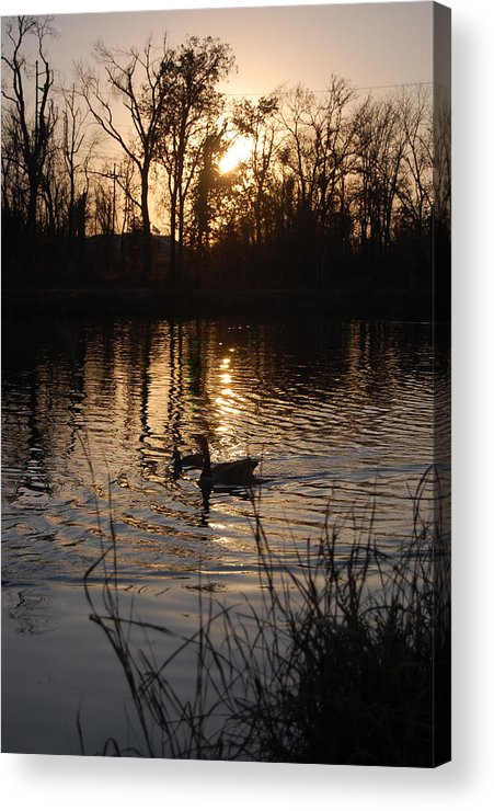 Trees Acrylic Print featuring the photograph Sunset by Audrey Venute