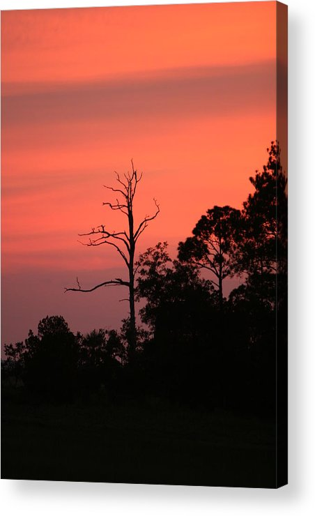 Sunset Acrylic Print featuring the photograph Sunset by Walt Reece
