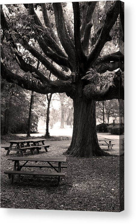 Acrylic Print featuring the photograph Swamp Chestnut Oak Tree-rosedale Plantation by Brian M Lumley