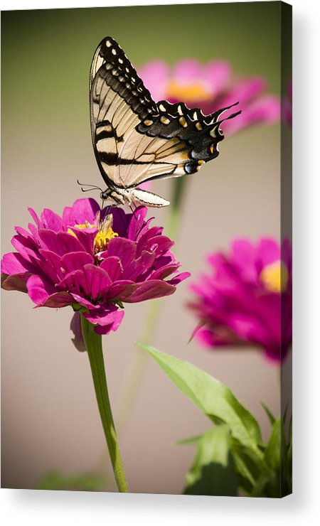 Butterfly Acrylic Print featuring the photograph The Flower And Butterfly by Chad Davis