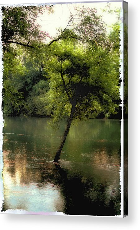 Tree Acrylic Print featuring the photograph The Tree Island by Ken Gimmi