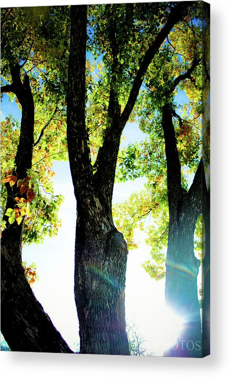 Landscape Acrylic Print featuring the photograph Three Tree Light by Jonah Vang
