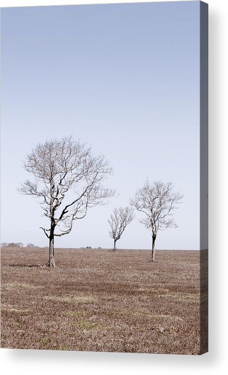 Trees Acrylic Print featuring the photograph Three Trees - Nantucket by Henry Krauzyk