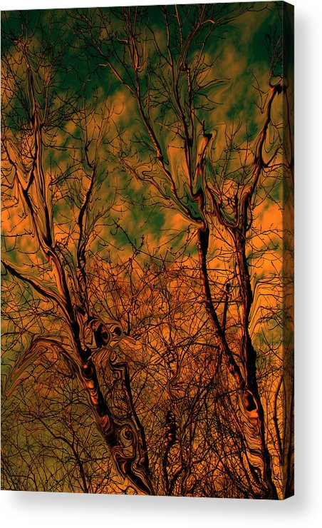 Trees Acrylic Print featuring the photograph Tree Abstract by Linda Sannuti