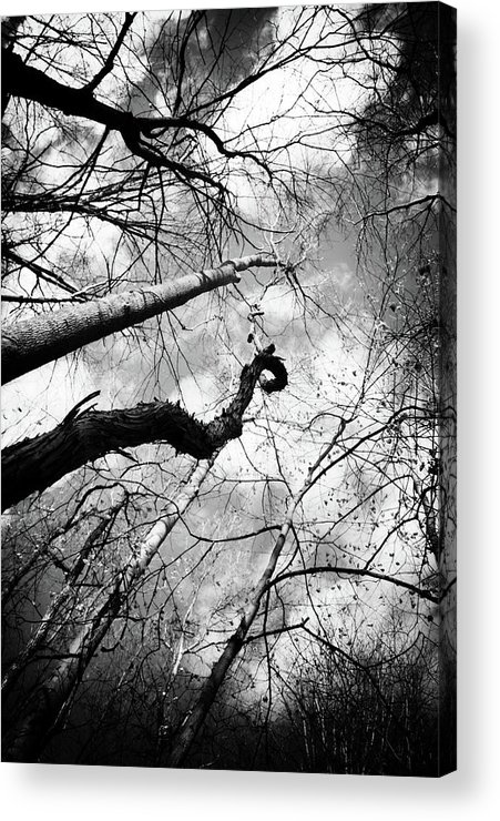 Black & White Acrylic Print featuring the photograph Trees And Vines by Off The Beaten Path Photography - Andrew Alexander