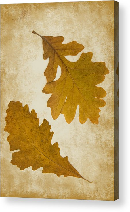 Oak Acrylic Print featuring the photograph Two Oak Leaves by Bernice Williams