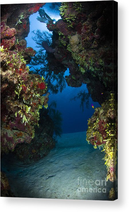 Sea Life Acrylic Print featuring the photograph Underwater Crevice Through A Coral by Todd Winner