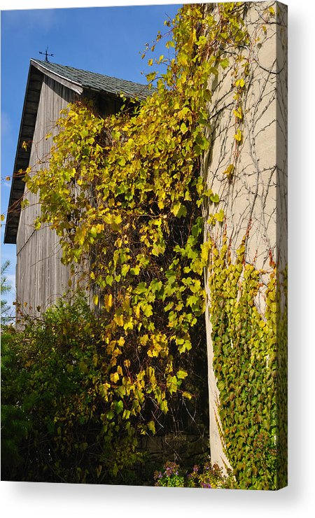 Silo Acrylic Print featuring the photograph Vined Silo by Tim Nyberg