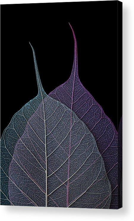 Leaves Acrylic Print featuring the photograph Vulnerability by Maggie Terlecki