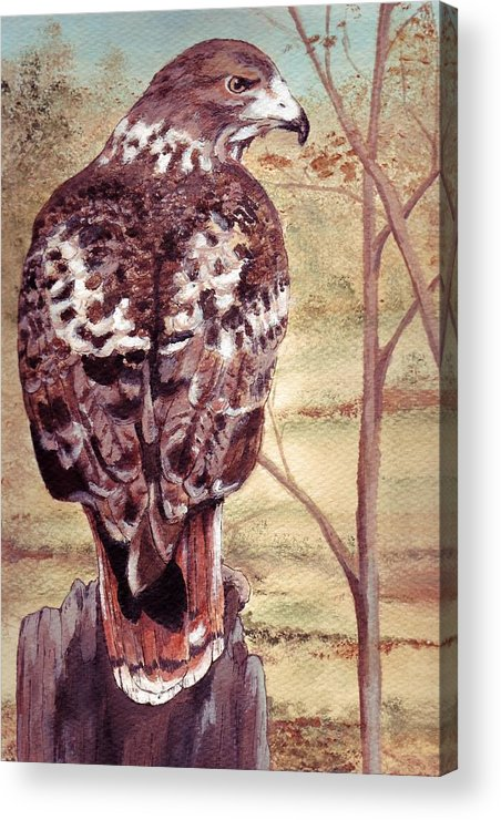 Red-tail Acrylic Print featuring the painting Watch Hawk by Debra Sandstrom
