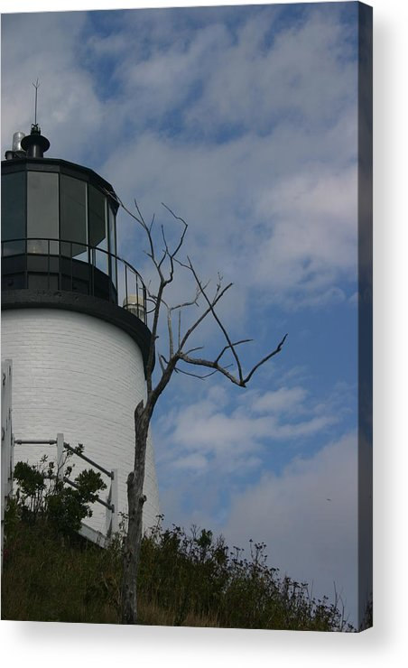 Landscape Acrylic Print featuring the photograph Watching Over Tree by Dennis Curry