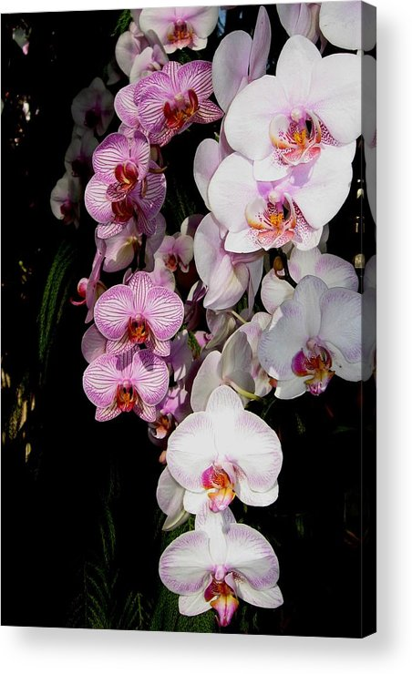 Orchid Acrylic Print featuring the photograph Waterfall by Betnoy Smith