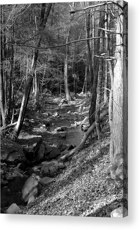 Nature Acrylic Print featuring the photograph Wesser Creek Trail by Kathy Schumann