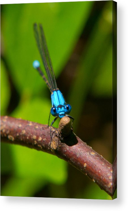 Insects Acrylic Print featuring the photograph What Are You Looking At by Frank Pietlock