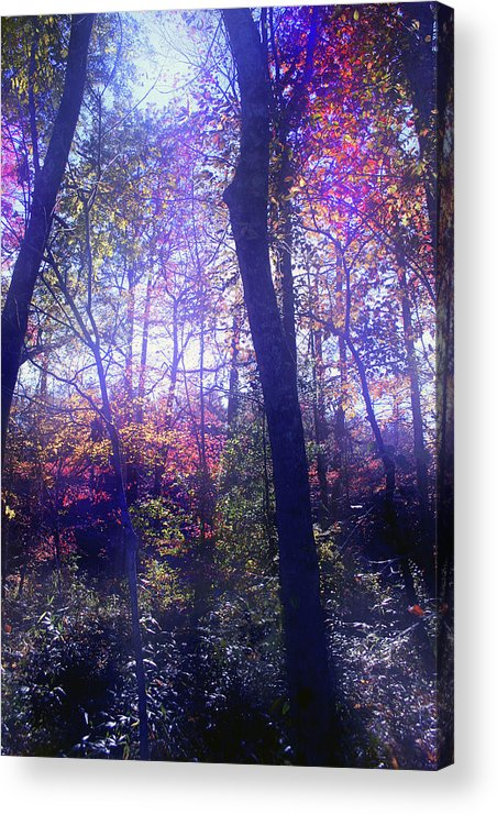 Forest Acrylic Print featuring the photograph When Forests Dream by Nina Fosdick