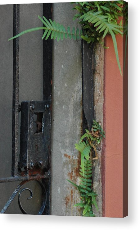Abstract Acrylic Print featuring the photograph Where The Fern Grows by Lori Mellen-Pagliaro