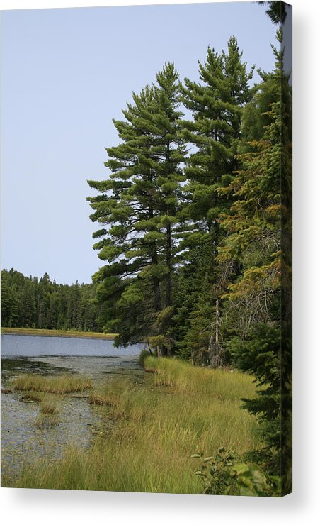 Landscape Acrylic Print featuring the photograph White Pines by Alan Rutherford