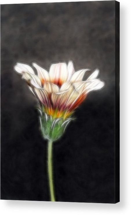 Wild Flowers Acrylic Print featuring the photograph Wild Petal Dreams by Lesley Smitheringale