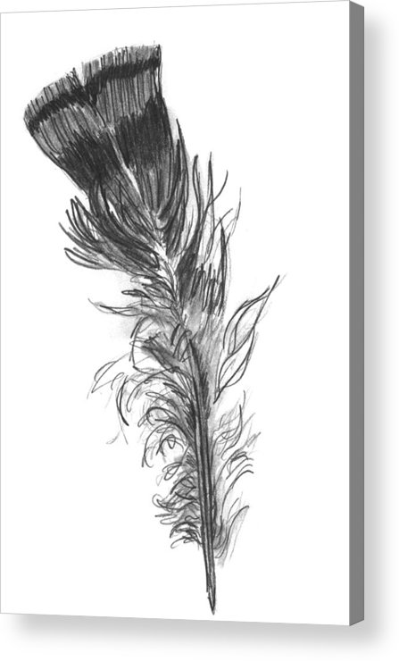 Wild Turkey Acrylic Print featuring the drawing Wild Turkey Feather by Kevin Callahan