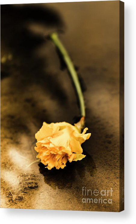Flower Acrylic Print featuring the photograph Wilting Puddle Flower by Jorgo Photography - Wall Art Gallery