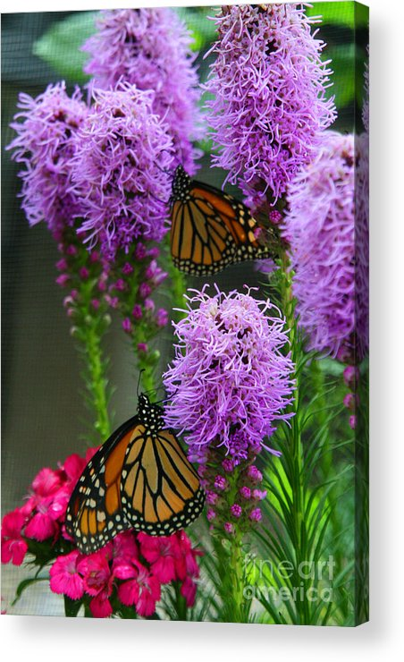 Nature Acrylic Print featuring the photograph Winged Beauties by Crystal Nederman