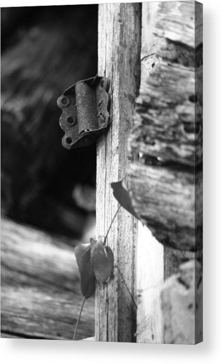 Ansel Adams Acrylic Print featuring the photograph Winslow Cabin Door Detail by Curtis J Neeley Jr