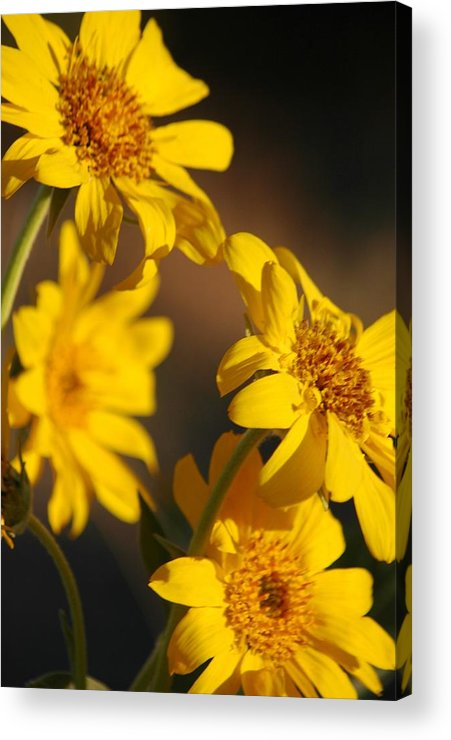 Flowers Acrylic Print featuring the photograph Worship The One Who Made Us by Lori Mellen-Pagliaro