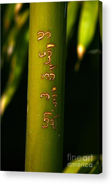Bamboo Acrylic Print featuring the photograph Written Bamboo 01 by April Holgate