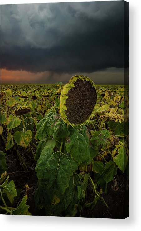 Tornado Acrylic Print featuring the photograph Twisted by Aaron J Groen